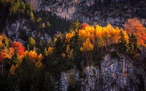Picture autumn, forest, light, trees, mountains, nature, rocks, foliage, yellow, bright colors, the colors of autumn, …