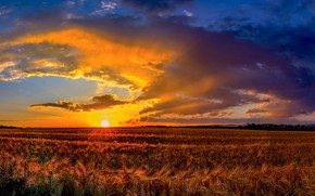 Picture field, the sky, sunset, panorama