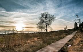 Picture light, bridge, nature