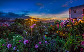 Picture the sun, rays, landscape, sunset, flowers, the city, CA, San Francisco, USA, Potrero Hill, Potrero …