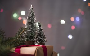 Picture holiday, gift, tree, new year, decor
