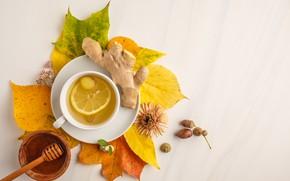 Picture autumn, leaves, lemon, tea, honey