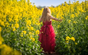 Picture field, summer, light, flowers, nature, mood, thickets, hair, yellow, blonde, girl, walk, bow, red dress, …