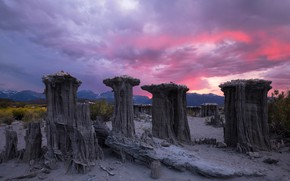 Picture the sky, mountains, America, shrubs, pink clouds, petrified stumps
