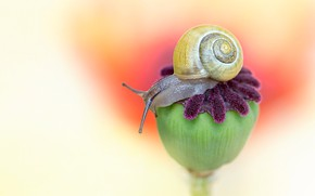 Picture macro, background, Mac, snail, seed box