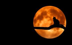 Wallpaper cat, night, the moon, mystic, black background, black cat, blood moon, blood moon, silhouette on ...