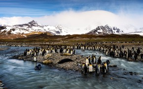 Picture winter, sea, snow, mountains, birds, penguins, Arctic