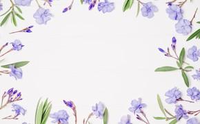 Picture flowers, background, frame, purple, flowers, violet, frame, floral