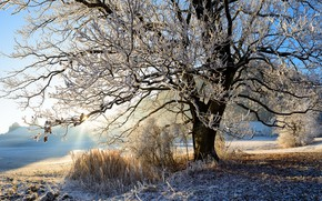 Picture frost, light, nature, tree, morning