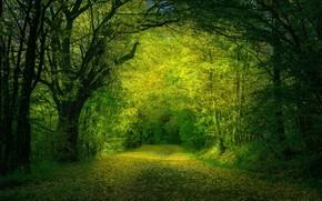Picture road, forest, leaves, trees, Nature, Zan Foar