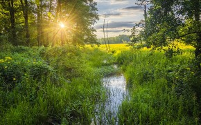 Picture forest, stream, morning