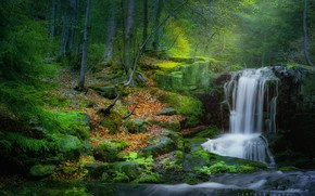 Picture forest, waterfall, moss