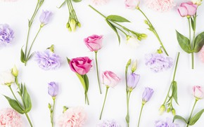 Picture flowers, buds, fresh, pink, flowers, violet, eustoma, eustoma