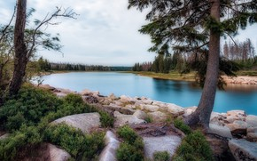 Picture stones, tree, shore, pond, pine
