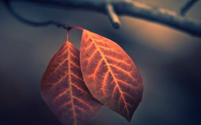 Picture leaves, macro, photo, bokeh