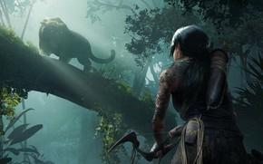 Wallpaper game, jungle, Lara Croft, beast, Shadow of the Tomb Raider