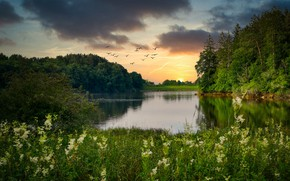 Picture forest, summer, grass, sunset, flowers, birds, lake, shore, pond
