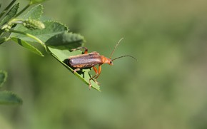 Picture background, beetle, weed