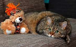 Picture cat, cat, look, face, pose, grey, background, sofa, toy, portrait, paws, lies, bear, plush, striped, …