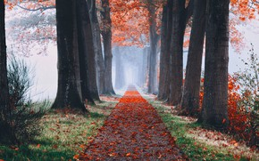Picture autumn, leaves, trees, fog, alley