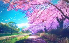 Picture Park, people, spring, Sakura, flowering