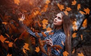 Picture autumn, look, leaves, girl, pose, branch, dress, Sergey Piltnik