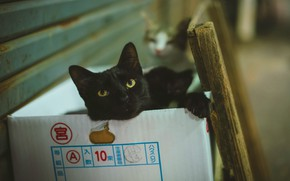 Picture cat, cat, look, face, cats, pose, wall, box, black, cats, portrait, paws, lies, two, bokeh, …