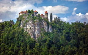 Picture forest, rock, castle