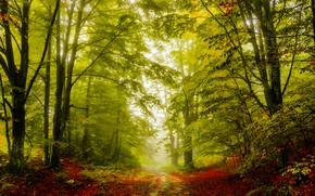 Picture road, autumn, forest, trees