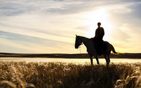 Picture field, sunset, horse, plant, shadow, rider