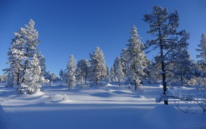 Picture winter, the sky, snow, trees, landscape, nature, blue