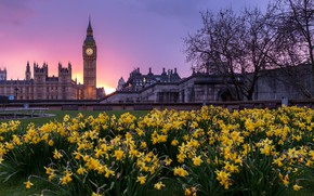 Picture trees, flowers, the city, lawn, London, building, tower, spring, the evening, UK, Big Ben, daffodils, …