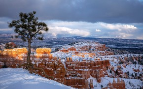 Picture winter, snow, tree, Utah, Bryce Canyon, Utah, Bryce Canyon National Park, National Park Bryce Canyon