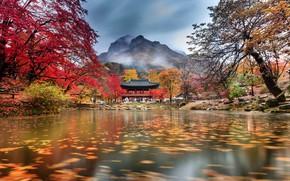 Picture autumn, clouds, trees, mountains, fog, pond, Park, temple, South Korea, Baegyangsa, Naejangsan