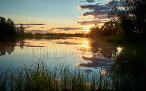 Picture grass, the sun, rays, landscape, sunset, nature, river, vegetation, Bank