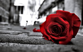 Picture Love, Red, Life, Rose, Flowers, Black, Road, Lonely