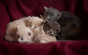 Picture kittens, sleep, beautiful background