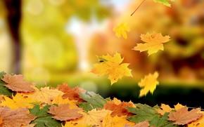 Picture photo, foliage, bokeh