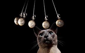 Picture cat, black background, hypnosis, the pendulum, Kasperowski, rocking, hyponotic