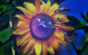 Picture leaves, stars, photoshop, seagulls, sunflower, the portal, bokeh, space
