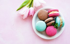 Picture tulips, macaroon, almond, picene, Olena Rudo