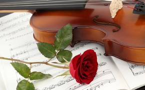 Picture flower, close-up, notes, violin, rose, notebook