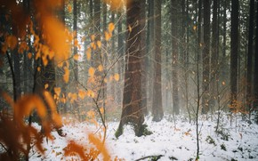 Picture winter, autumn, forest, leaves, snow, trees, late autumn