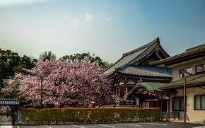 Picture Sakura, Japan, Japan, Architecture, Sakura, Nara, Nara, Architecture