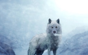 Picture white, background, wolf