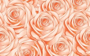 Picture background, pink, roses, texture, buds