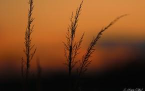 Picture winter, sunlight, feather grass, Zimny sunset