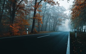 Picture road, autumn, trees, highway