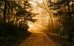 Picture road, forest, the sun, light