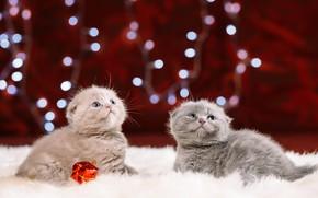 Picture look, kittens, fur, kids, sitting